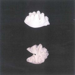 sculptures-shell-1995_thumb