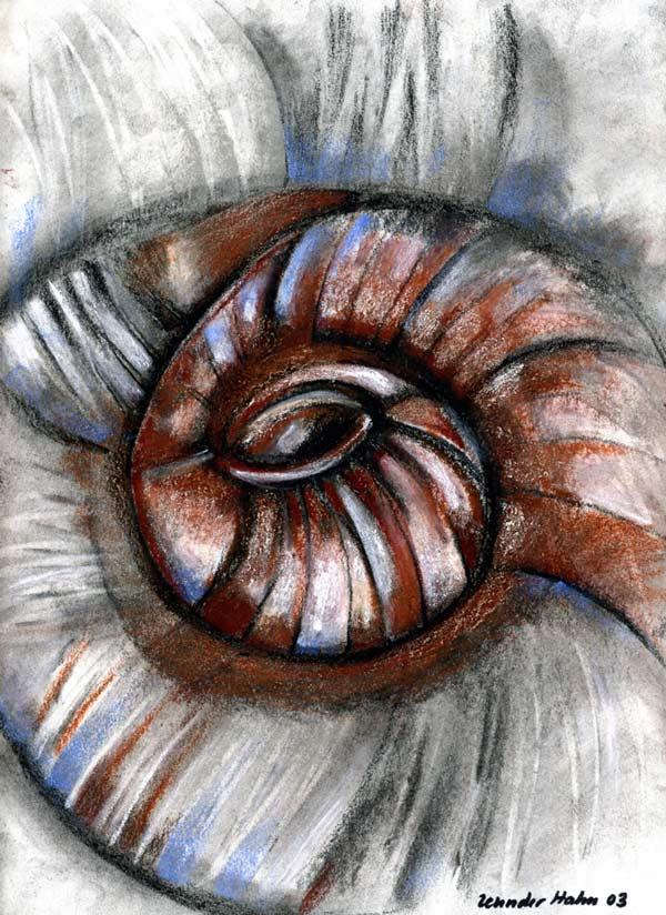 Shell 5 artwork